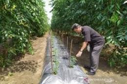 sumut.antaranews.com