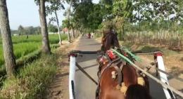 mengendali kuda
