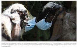 Hewan kurban untuk Idul Adha diberi masker oleh pedagang (foto: Antara/Maulana Surya)