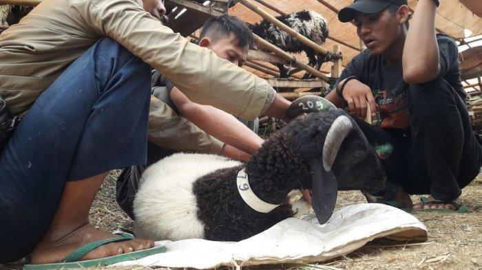 Foto penyembelihan domba kurban - Tribun Jabar/Ery Chandra