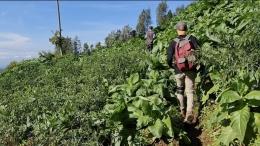 Menyusuri ladang tembakau (dokpri)