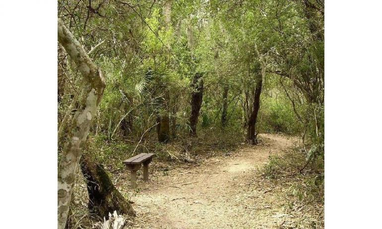 https://alchetron.com/Thorn-forest