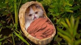 Kisah kucing diadopsi tikus   sumber gambar:Youtube.com/AaronsAnimals