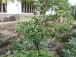 Aneka sayuran| Sumber: Dokumentas pribadi