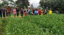 Belajar ilalang di ladang gandum (Dokumentasi pribadi)
