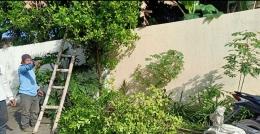 Ilustrasi seseorang memetik daun jeruk purut untuk sambel/foto Sri Rohmatiah Djalil