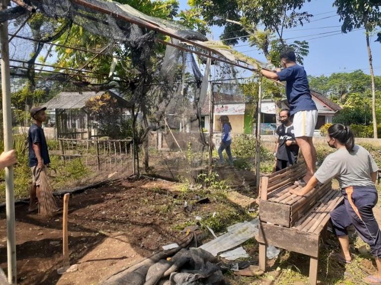proses pembenahan greenhouse (dokpri)