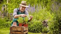 Ilustrasi gambar https://amp.suara.com/lifestyle/2020/07/12/152943/punya-hobi-berkebun-ini-4-manfaat-memiliki-tanaman-di-dalam-rumah