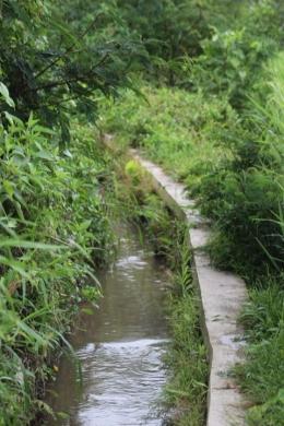 parit atau kalen yang mengairi sawah sawah desa (foto: Joko Dwiatmoko)