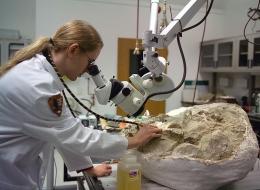 Ilustrasi Mengoptimalkan Laboratorium dalam Riset Arkeologi di Indonesia. Sumber: www.paleowire.com