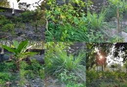 Ilustrasi gambar, beberapa tanaman di kebun, olah picsart dokpri Yuliyanti