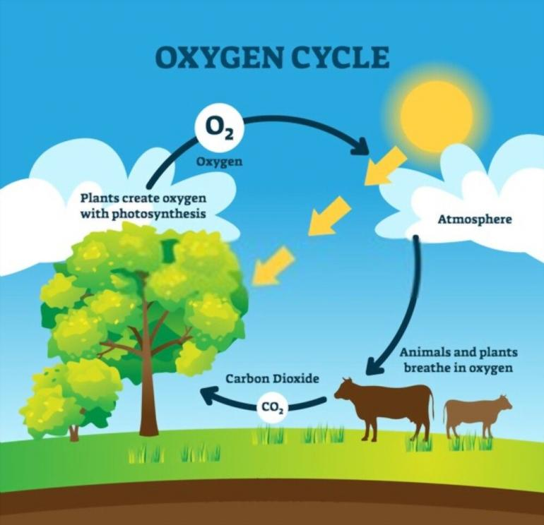 Sumber. oxygen cycle/shutterstock