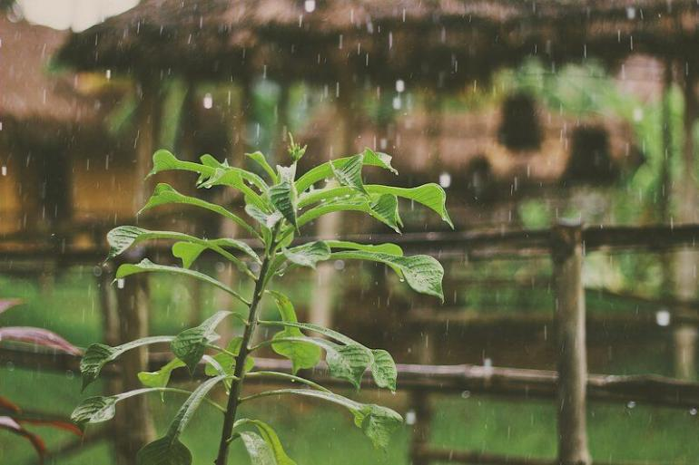 Ilustrasi Hujan Datang Lagi - Photo by Mike Kotsch on Unsplash