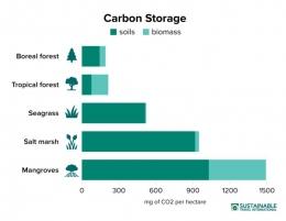 Gambar 2. Perbandingan Penyerapan Carbon Mangrove dengan Jenis Tanaman Lain[3]
