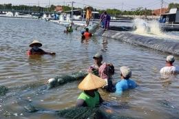 Gambar 5. Tambak udang yang dilanda banjir rob, Tegal, Jawa Tengah[17]