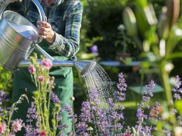 Sebelum berkebun, pertimbangkan ketiga hal berikut ini dengan matang agar tanaman kita tumbuh subur (Ilustrasi: saga.co.uk)