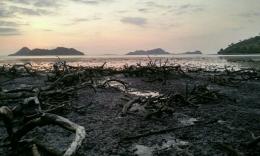 Hutan Mangrove di NTT dibakar, sumber: voxntt