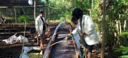 Foto : Mahasiswa Unwina Sumba turut membantu kelompok pembibitan Cendana/dokpri