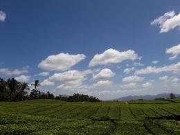 Pemandangan yang menawan hati di perkebunan teh Sidamanik.