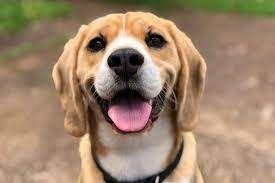Ilustrasi Anjing. Sumber: Kompas