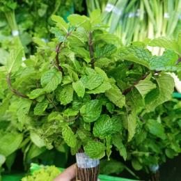 Ilustrasi satu ikat daun mint di supermarket | Dokumentasi pribadi