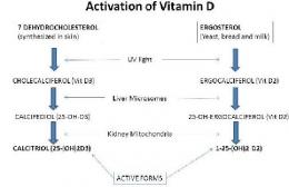 Ilustrasi reaksi aktivasi Vitamin D (Sumber: researchgate.net)