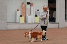 Anjing dan pemiliknya di Inggris (dokumentasi pribadi)