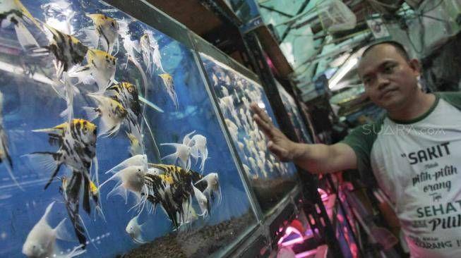 Ilustrasi membeli barang hobi yang terlalu mahal, sumber: Suara.com/Fakhri Hermansyah