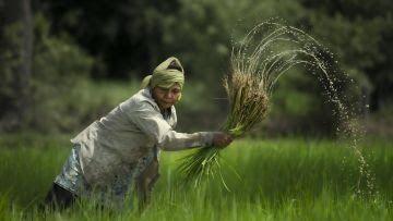 Seorang petani sedang menanam padi. Foto: Shutterstock/Weerapon