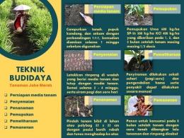 Dokpri/Video dan leafletpenjelasan budidaya dan pemanfaatan jahe merah sebagai tanaman obat keluarga