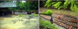 Ilustrasi Pemanfaatan sungai untuk menghilir batang-batang sagu ke tempat industri pengolahan sagu. Sumber: Balar Maluku/Wuri Handoko