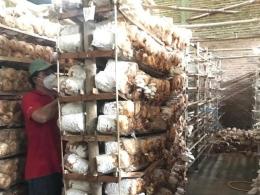 Usaha budidaya jamur yang dimiliki oleh Ibu Umi di Desa Gondosari, Kecamatan Gebog, Kabupaten Kudus