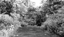 Lokasi jembatan yang di tumbuhi pohon, dokpri