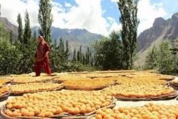 Buah aprikot yang sedang dikeringkan di Lembah Hunza (https://i.pinimg.com)