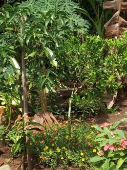 Ilustrasi, berbagai jenis tanaman di kebun pekarangan atau pomahan. Sumber: Dokumentasi Pribadi