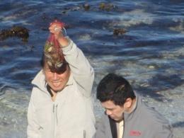 Abalone yang ditangkap (dok pribadi)/ foto : suami dan putera kami Irmansyah Effendi