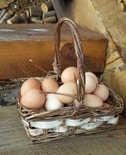 Telur dalam satu keranjang yang menggambarkan adanya resiko besar jika hanya satu macam investasi. (Foto : pixabay.com)