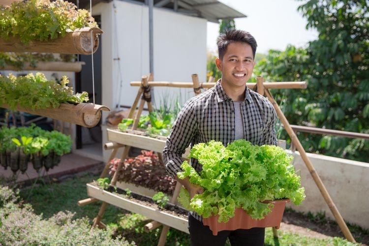 Ilustrasi berkebun, menanam sayuran di rumah. (SHUTTERSTOCK/ODUA IMAGES)