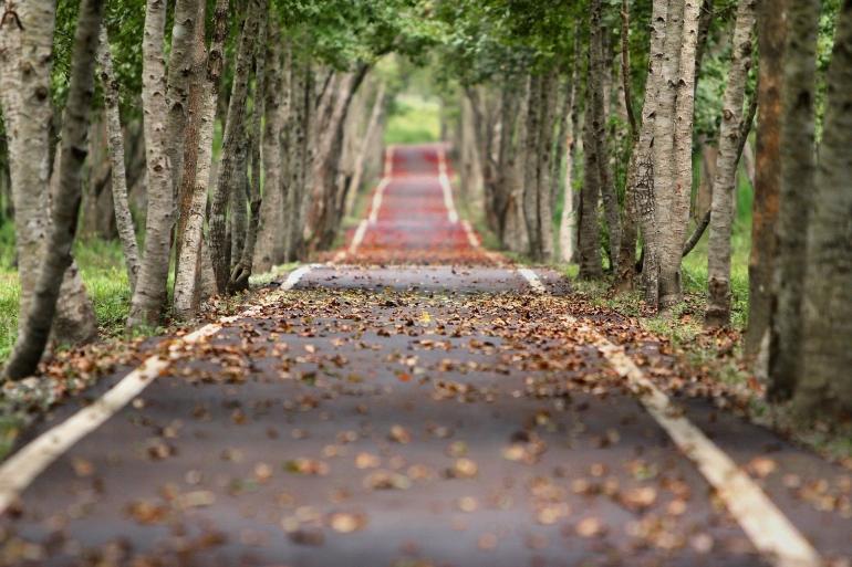 Avenue Trees Road Tree - Free photo on Pixabay