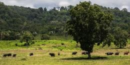 Ilustrasi Taman Nasional Alas Purwo di Banyuwangi, Jawa Timur.  Sumber: ARSIP HUMAS PEMKAB BANYUWANGI via Kompas.com
