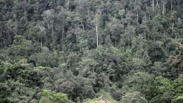 Kawasan hutan primer yang relatif masih utuh di Kabupaten Paser, Kalimantan Timur (Foto: Iwan Setiyawan /Kompas).