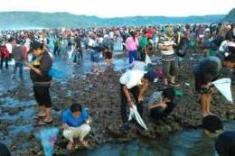 Tradisi budaya Bau Nyale (KOMPAS.COM/KARNIA SEPTIA)