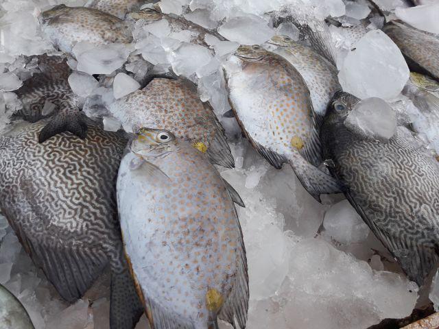 Ikan-ikan segar di Indonesia begitu beragam   dokpri