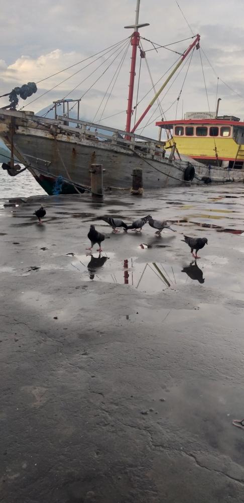 Burung-burung mencari makan di pelabuhan. Dokpri