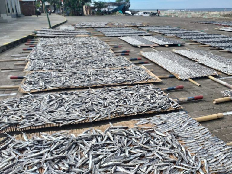 Ikan tuing-tuing (berita daerah.co.id)
