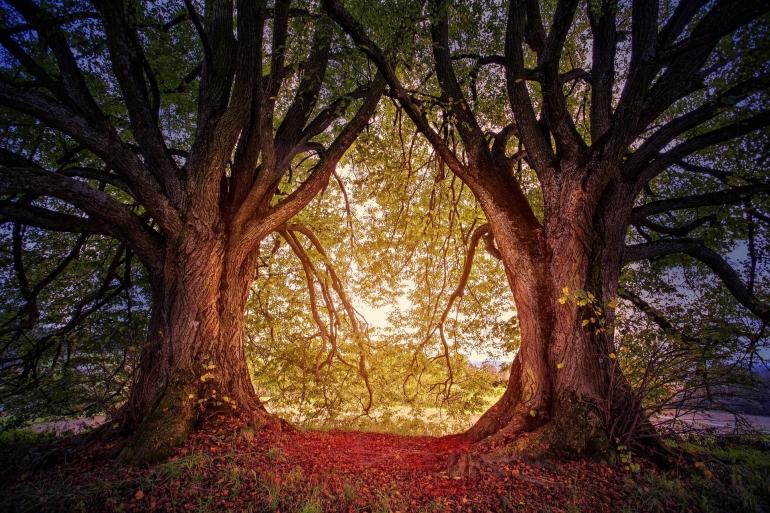 Ilustrasi ritual mengusir hantu penunggu pohon kembar oleh jplenio dari pixabay.com