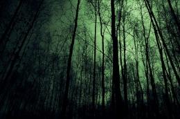 Ilustrasi-Foto: http://www.bowsandcurtseys.com/2011/08/midnight-forest-enticing-emerald-eyes.html