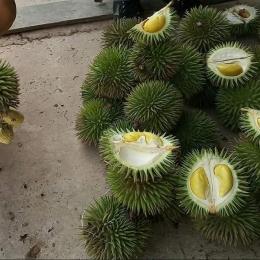 Ilustrasi durian Kalimantan Timur | Foto : Liputan6.com