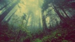 Hutan. (Foto: pixabay.com)