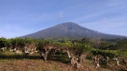 Gunung Dempo dilihat dari kebun teh PTPN VII (Dokumentasi Pribadi)